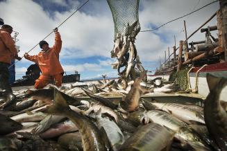 Экспорт из ДФО сельхозпродукции и рыбы восстановился — Юрий Трутнев