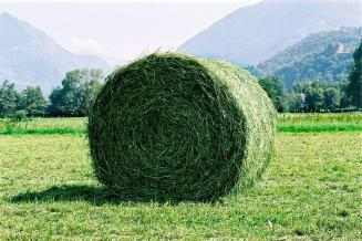 В Красноярском крае перевыполнен план заготовки сена и сенажа