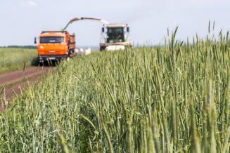 В Калининградской области заготавливают корма