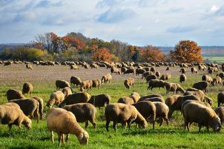 Путин отметил возможности России и Казахстана в сфере производства экологически чистого мяса