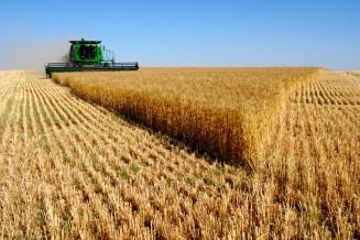 Урожай зерновых вМосковской области убран с91,6% запланированной площади