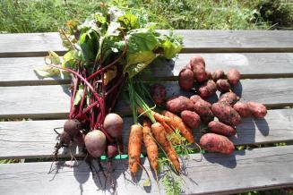 Страны СНГ увеличили поставки в Россию овощей «борщового набора»