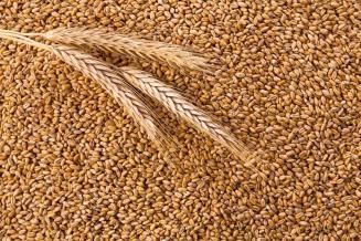 В России установлен порядок взаимодействия ФГИС прослеживаемости зерна с другими базами данных