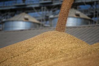В России собрано более 90 млн т зерна