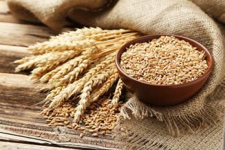 В Алтайском крае 94% пшеницы— продовольственное зерно