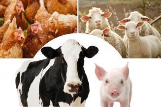 В Свердловской области произведено 474,6тыс.т молока