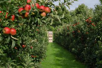 Садоводы Ставрополья получили 494,8 млн руб. господдержки