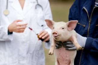 Госдума поддержала нормы обужесточении требований кприменению антибиотиков вАПК