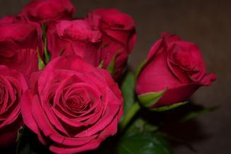 В2021 году мордовская ГК«Мир цветов» планирует увеличить производство роз до45млн шт.