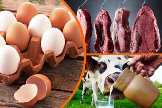 В Липецкой области продолжается рост производства куриных яиц
