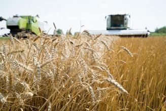 В Пензенской области убрано 94% посевов зерновых