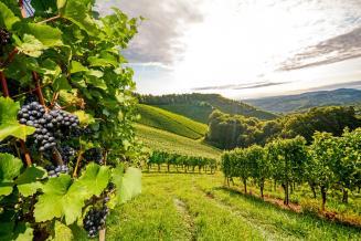 ЕС расширяет поддержку винодельческого, фруктового и овощного секторов АПК