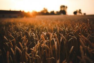 На Южном Урале собран 1млнт зерна