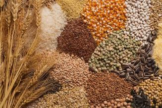 Валовой сбор зерна вТамбовской области составил 3,1млнт