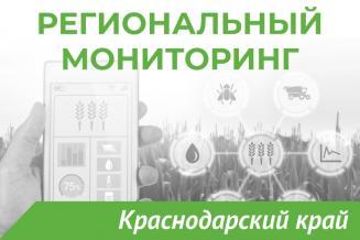 Еженедельный бюллетень о состоянии АПК Краснодарского края на 27 сентября