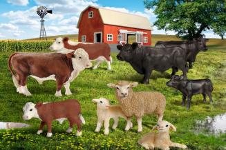 В КФХ Курганской области увеличилось поголовье КРС, выросло производство мяса и молока